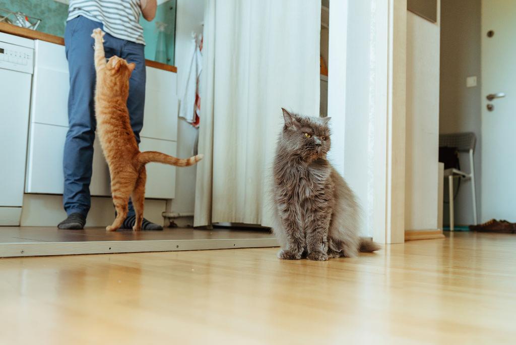 sesja narzeczenska z kotami