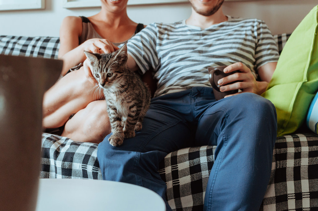 sesja narzeczenska z kotem