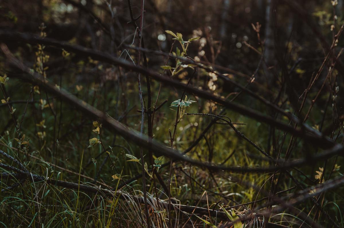 las ligocka kuźnia rybnik